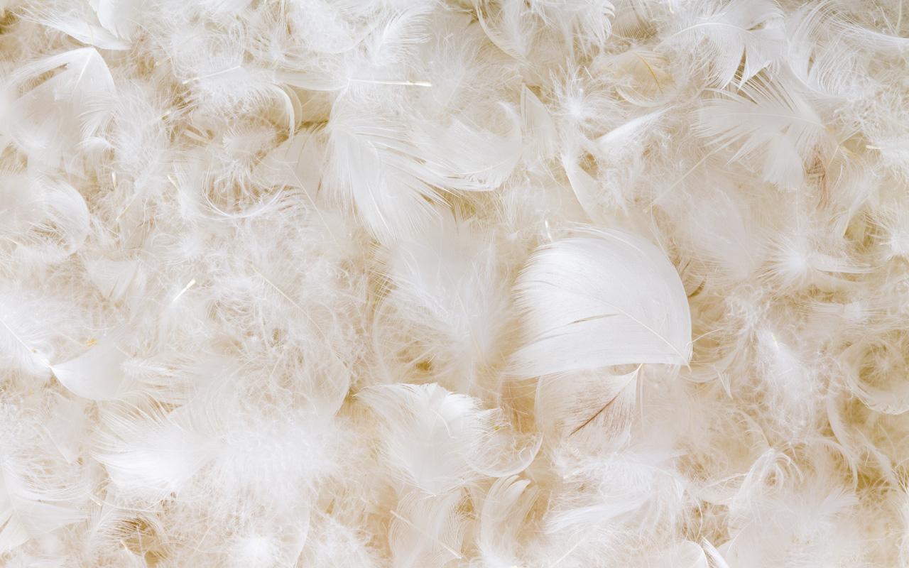 神奇的鴨子羽毛有多神奇?